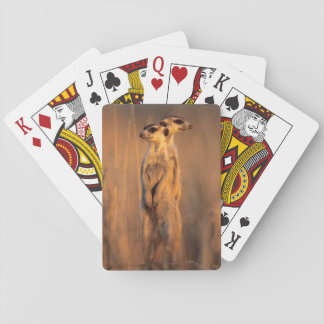 A pair of Suricates standing on a rock at sunset Poker Deck