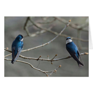 A Pair of Tree Swallows Card
