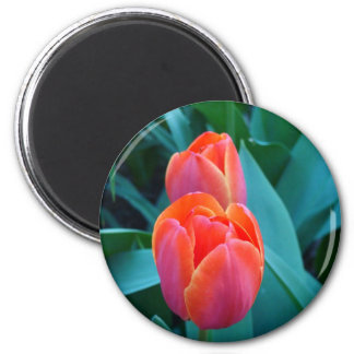 A pair of tulips 6 cm round magnet