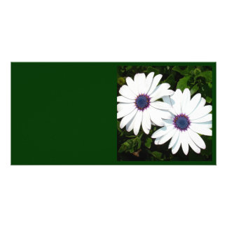 A Pair of White African Daisies Photo Cards