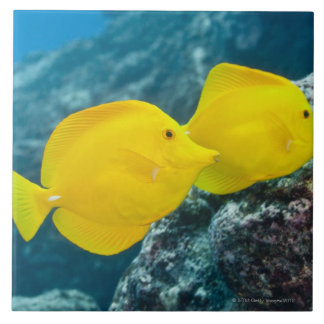 A Pair of Yellow Tangs Tile