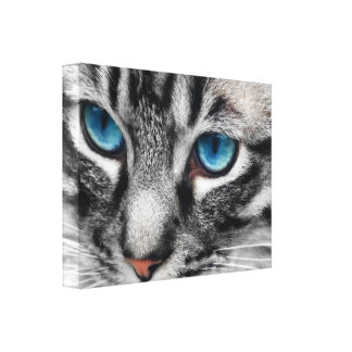 A-PAL 24x18 Silver Tabby Cat with Blue Eyes Canvas Prints