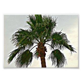 A Palm Tree Photo Print