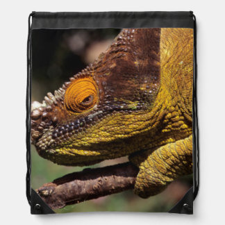 A Parson's Chameleon perched on a branch Drawstring Backpacks
