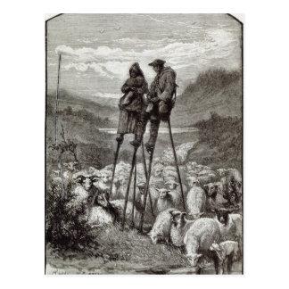 A Pastoral in the Landes Postcard
