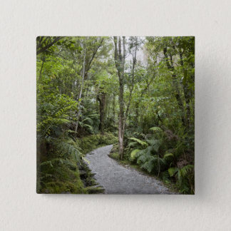 A path through a rain forest at the base of 15 cm square badge