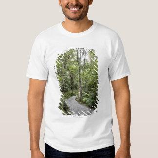 A path through a rain forest at the base of tshirt