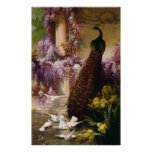 A Peacock and Doves in a Garden Print