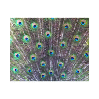 A Peacock's Trance Canvas Print