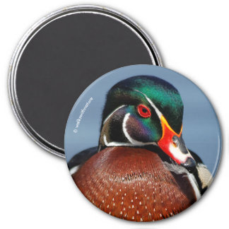 A Pensive Wood Duck Drake Magnet