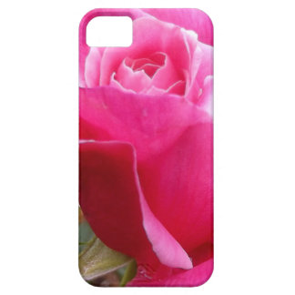 A Perfect Deep Pink English Rose iPhone 5 Cover