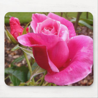 A Perfect Deep Pink English Rose Mouse Pad