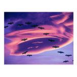 A photo composite of Sandhill cranes in flight Postcards