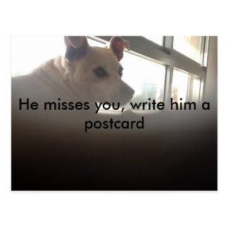 A picture of a sad dog . He misses you. Postcard