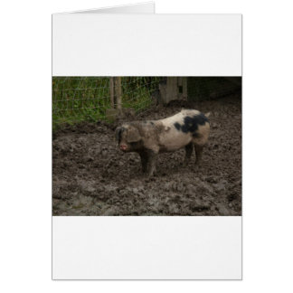 A pig in muck greeting card