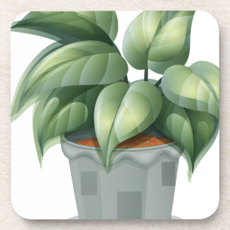 A plant in a pot beverage coasters