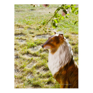 A plastic dog in a garden. post cards