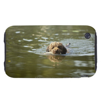 A playful dog cools off in the summer heat. tough iPhone 3 covers