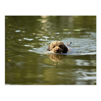 A playful dog cools off in the summer heat. postcard