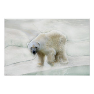 A polar bears icy cold poster