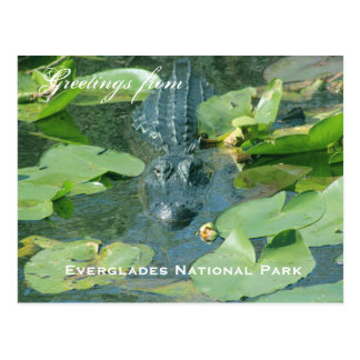 A postcard greeting from Everlages National Park