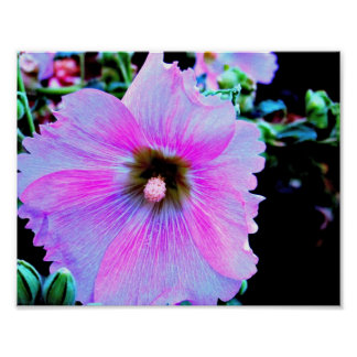 A Purple Hibiscus Poster