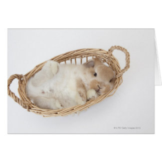 A rabbit is in a basket.Holland Lop. Greeting Card