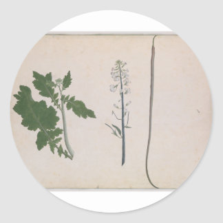 A Radish Plant, Seed, and Flower Classic Round Sticker