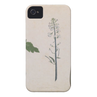 A Radish Plant, Seed, and Flower iPhone 4 Case