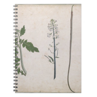 A Radish Plant, Seed, and Flower Note Book