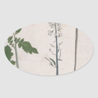A Radish Plant, Seed, and Flower Oval Sticker