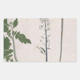 A Radish Plant, Seed, and Flower Rectangular Sticker