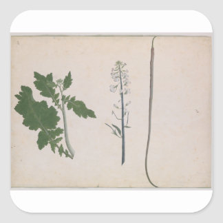 A Radish Plant, Seed, and Flower Square Sticker