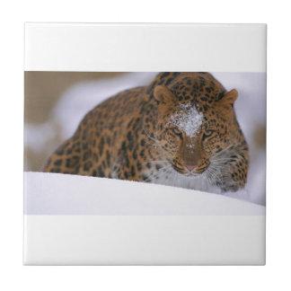A Rare Amur Leopard Peers Over a Snowy Embankment. Ceramic Tile
