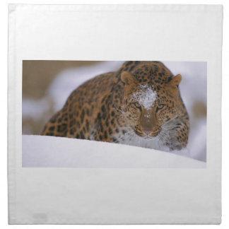 A Rare Amur Leopard Peers Over a Snowy Embankment. Napkin