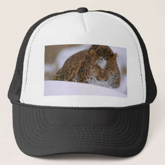 A Rare Amur Leopard Peers Over a Snowy Embankment. Trucker Hat