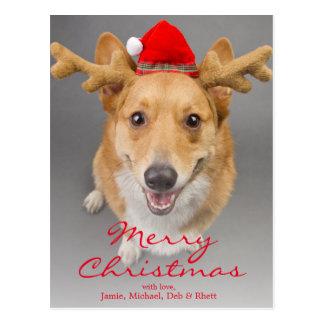 A Red and white Pembroke Welsh Corgi dog Postcard