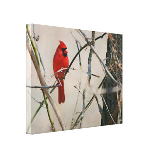 A Red Cardinal Bird on a Branch in the Woods Canvas Print