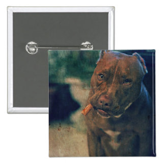 A Red Nose Pit Bull Chewing a Cigar Button