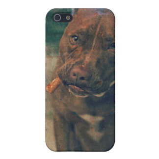 A Red Nose Pit Bull Chewing a Cigar iPhone 5/5S Covers