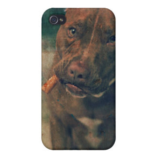 A Red Nose Pit Bull Chewing a Cigar iPhone 4/4S Cases
