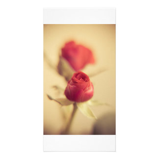 A red rose for the mother… photo card template