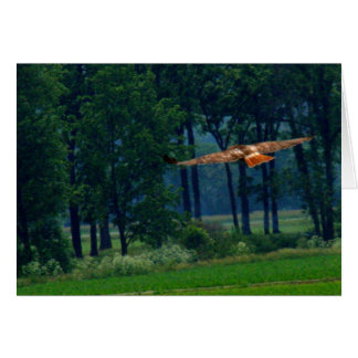A Red Tailed Hawk In Flight Greeting Card