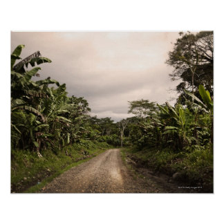 A remote jungle road poster