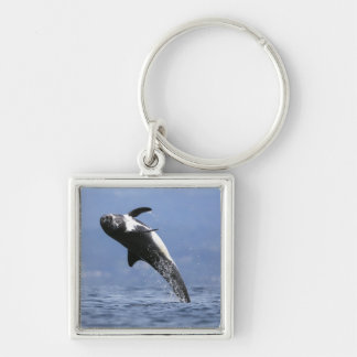 A Risso Dolphin Key Ring