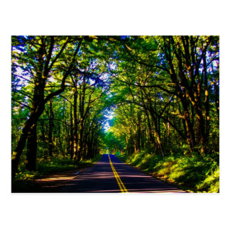 A Road Running Through A Green Forest In Oregon Postcard