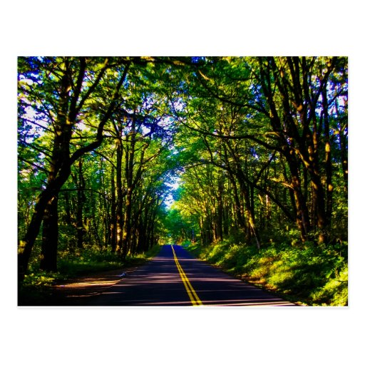 A Road Running Through A Green Forest In Oregon Post Card