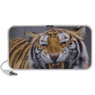 A roaring tiger, Taiwan, Taipei, Taipei Zoo PC Speakers