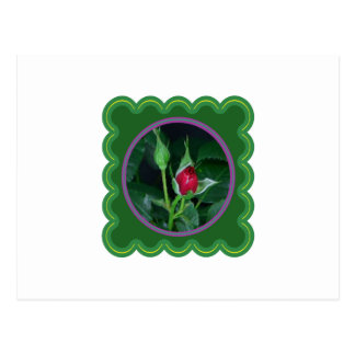A rose bud for you my love Flower Floral 100 gifts Postcard