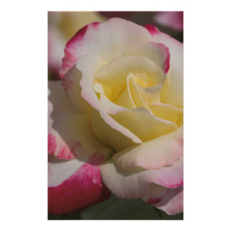 A Rose Custom Stationery